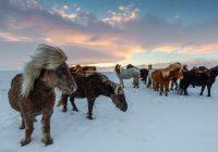 Islandia – piękno, które wymaga poświęceń